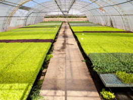 Farming in New Jersey - What to Look for When Choosing Flooring for Grow Rooms and Greenhouses